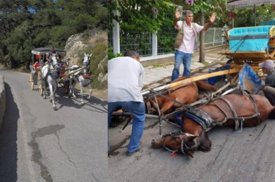 fayton at ölümü